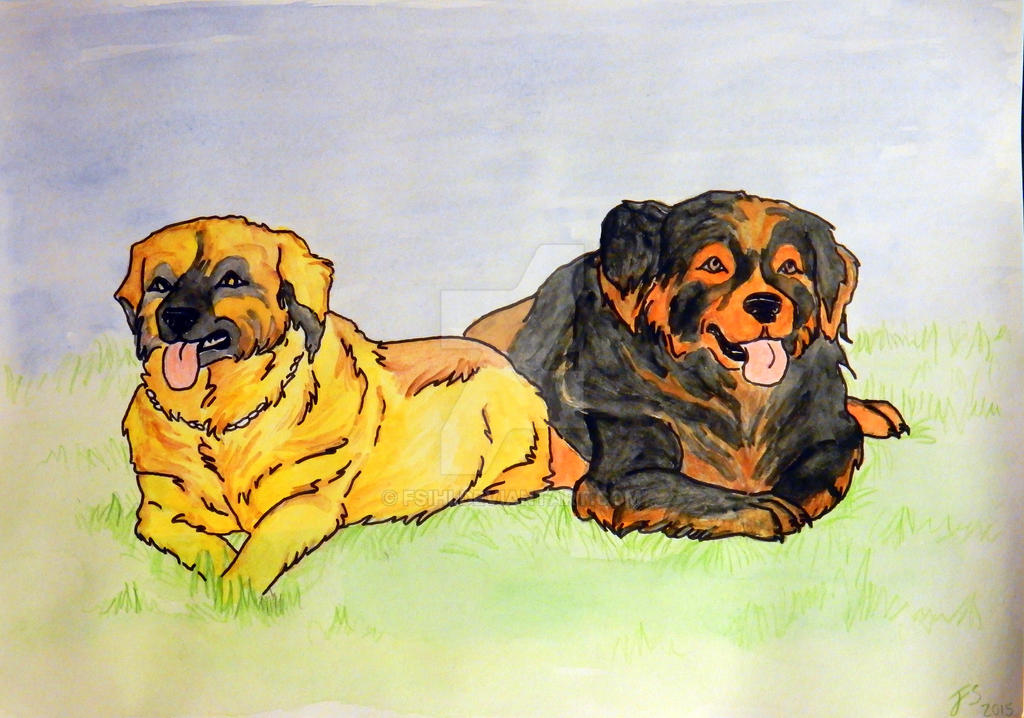 Mountain dogs by Fsihi