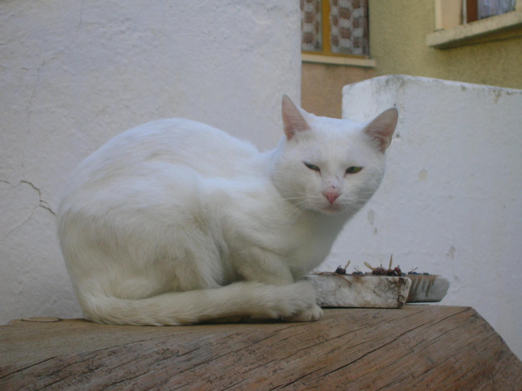 the white cat 2 by LillithDarkmoon