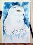 Hedwig [Harry Potter]