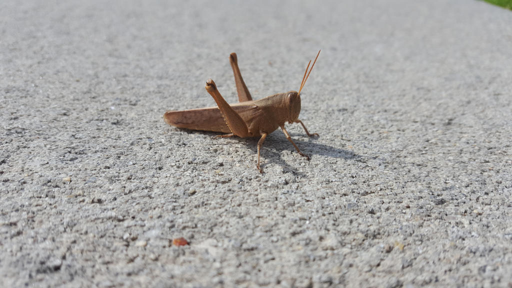 Bug 14 by AwesomeStock
