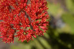 San Diego Botanic Garden 26