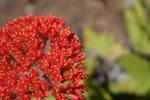 San Diego Botanic Garden 25