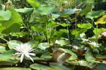 San Diego Botanic Garden 23