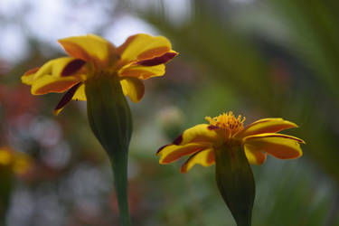 San Diego Botanic Garden 96 by AwesomeStock