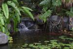 San Diego Botanic Garden 75