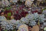 San Diego Botanic Garden 123