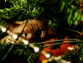 Christmas Cat by TheBigIdeaRo
