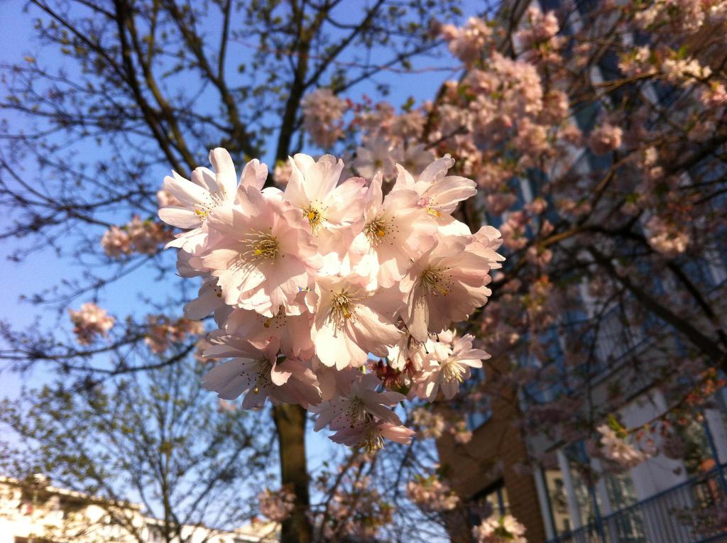 Springtime Pretty by Franzili