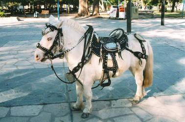 The Mini-Horse by SunDropsTonight