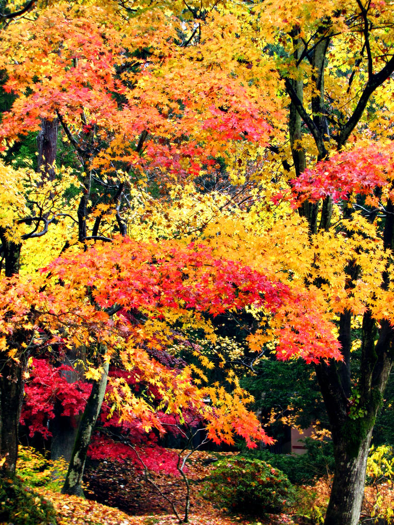 maple by FubukiNoKo