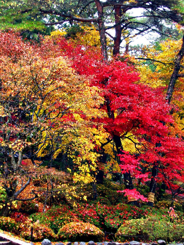 fall fall by FubukiNoKo