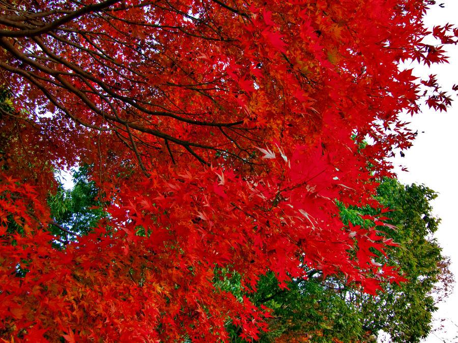 red by FubukiNoKo
