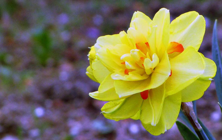spring by FubukiNoKo