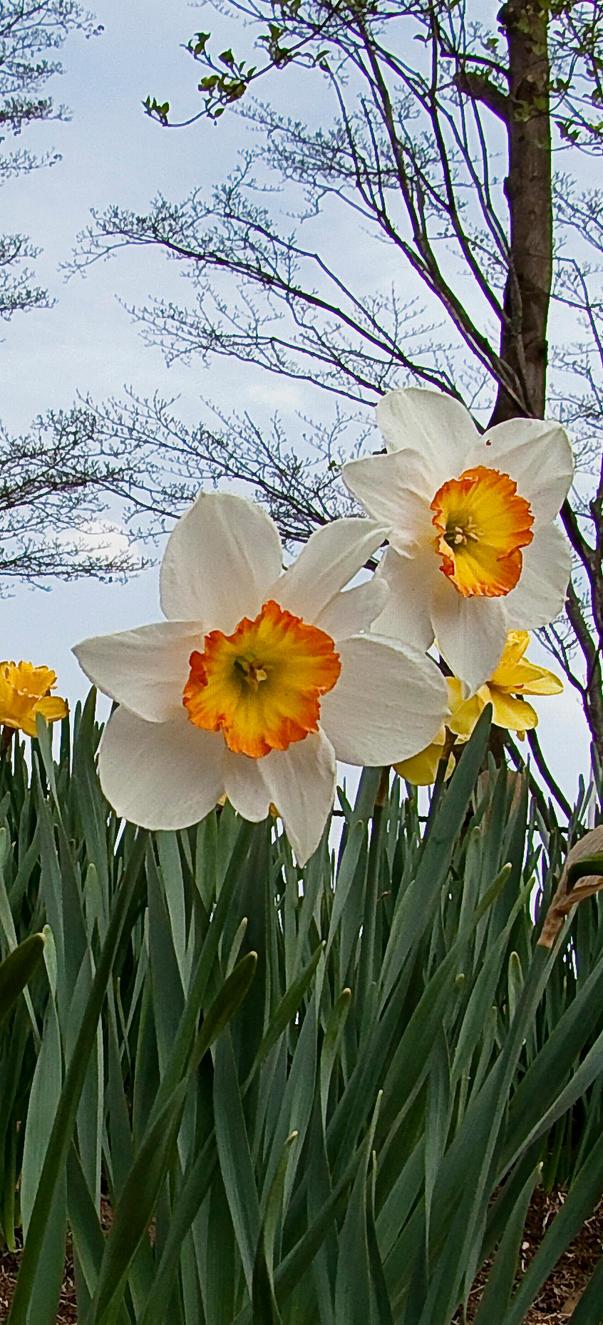 it is spring again by FubukiNoKo
