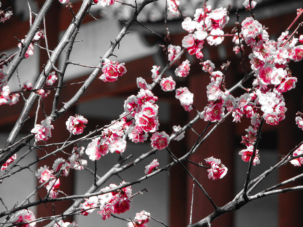 plum blossoms by FubukiNoKo