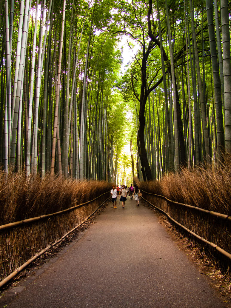 3989 bamboo forest by FubukiNoKo