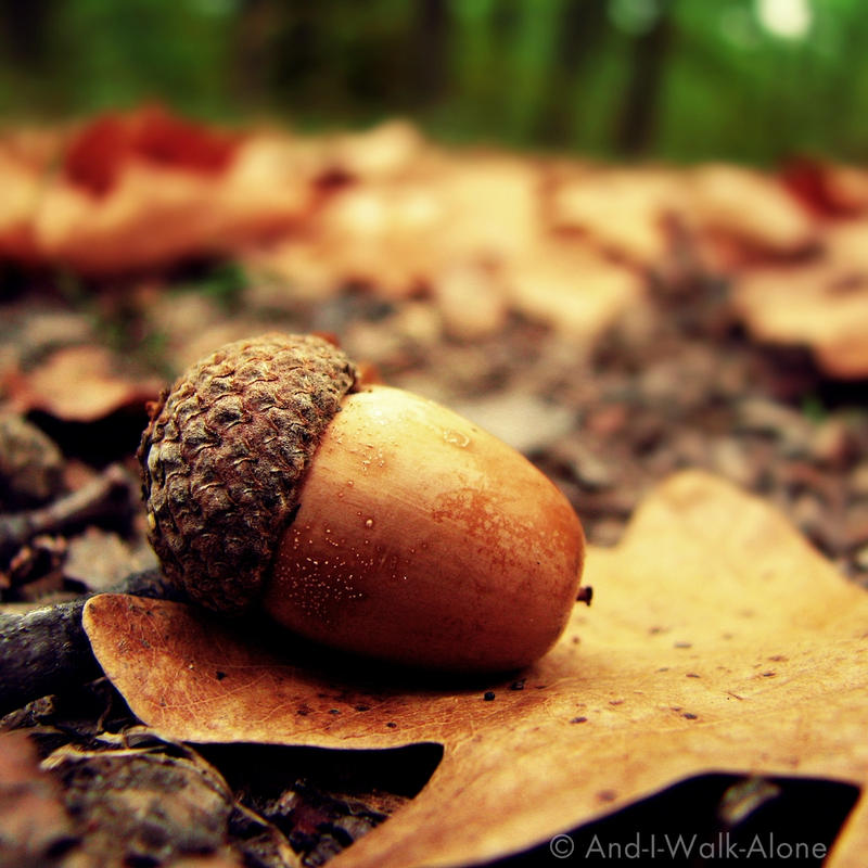 Autumn Photography