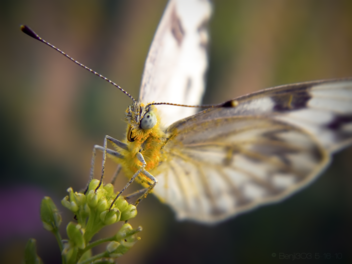 Good Morning Butterfly By Benji3o3 On Deviantart