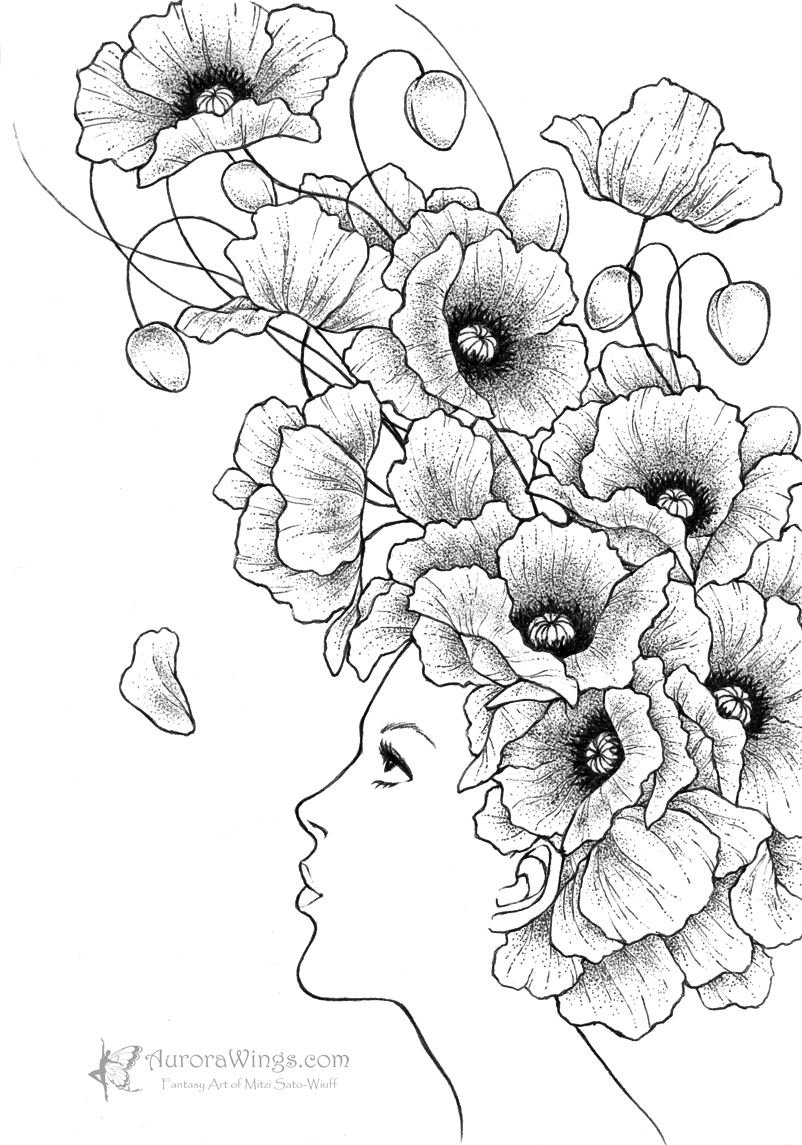 Gallery for opium poppy flower drawing paperplay for Poppy flower drawing images