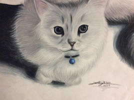 Cat Request~ Little Sunshine by LusciousLavender