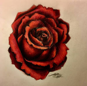 Red Rose Colored Pencil Drawing