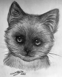 Siamese sketch