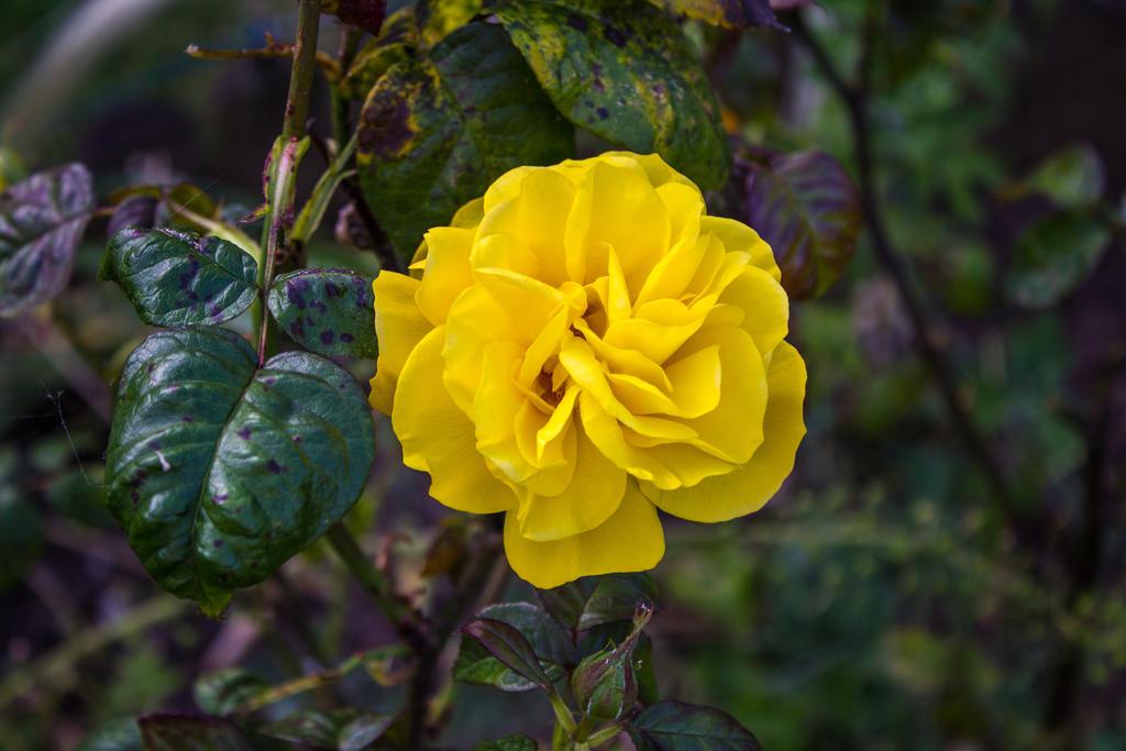 Yellow Flower by Samuel-Benjamin