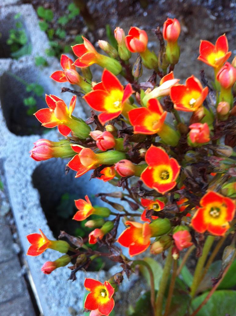Cute flowers by NagaOne-Chan