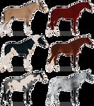 warmblood stallions [CLOSED]