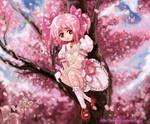 madoka cherry blossom