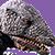 Gorosaurusplz
