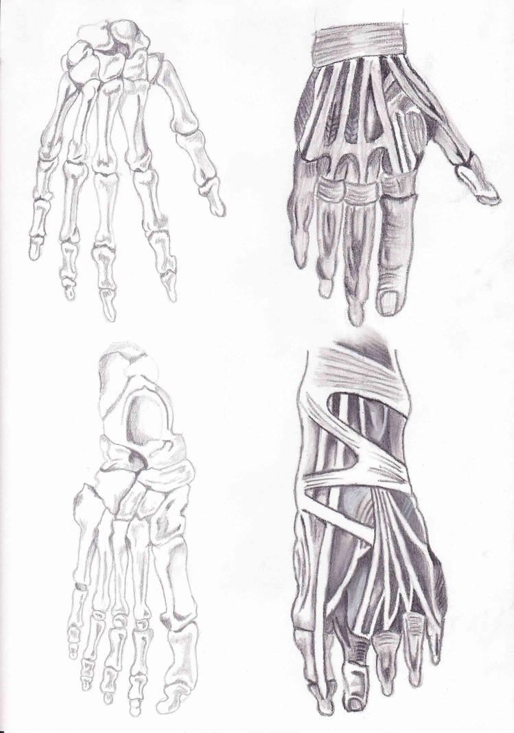 Hand and Foot Anatomy by EnahMacKenneth on DeviantArt