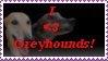 greyhound by docyboy123