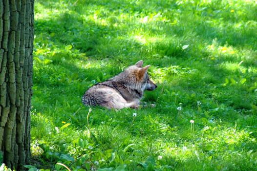 Resting Green