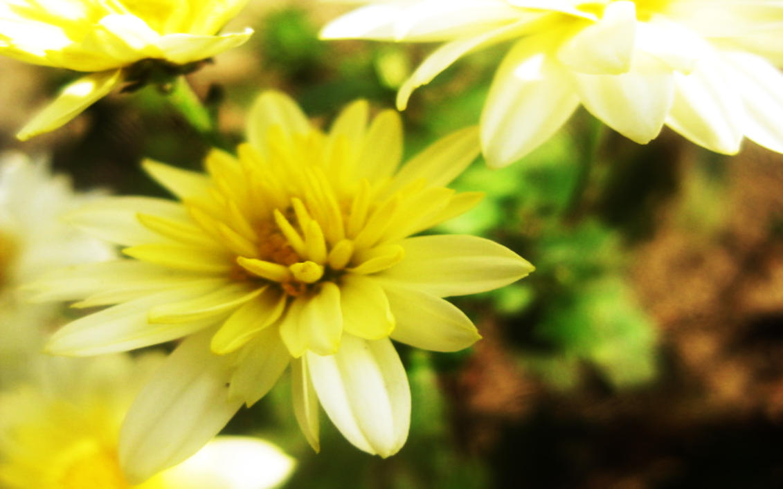 Golden Flower by Guest34712