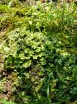 Primordial Plant by deliciousninja