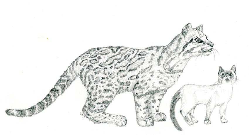 how to make an ocelot a cat