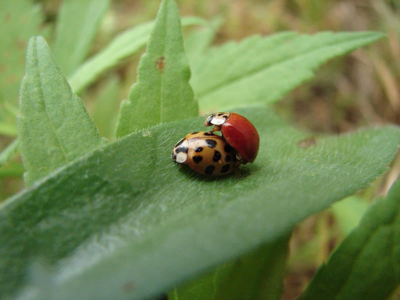 ladybugs_2 by super-chicken-stock
