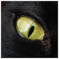 cat eye by super-chicken-stock