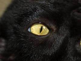 cat_eye by super-chicken-stock