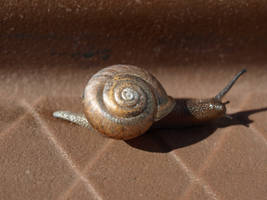 snail shell I by super-chicken-stock