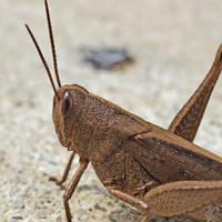 grasshopper armor by super-chicken-stock