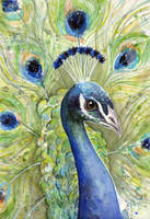 Peacock Watercolor Portrait