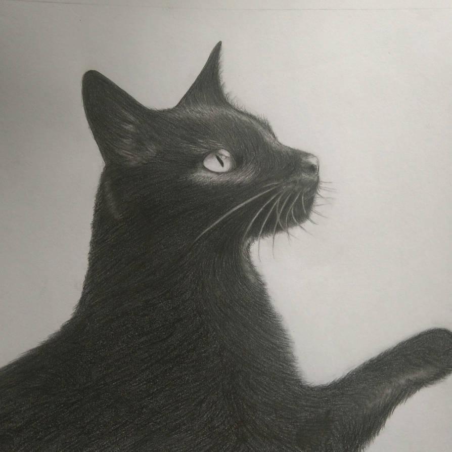 Black cat by Shira-Hisa