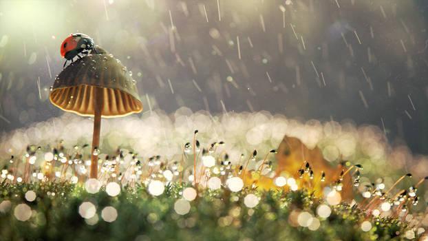 Mushroom rain
