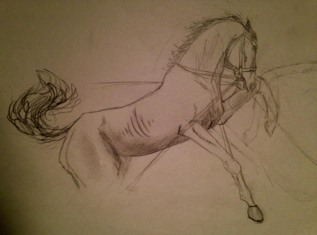 The Race Horse by Spideer