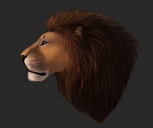 Lion by MrDromus