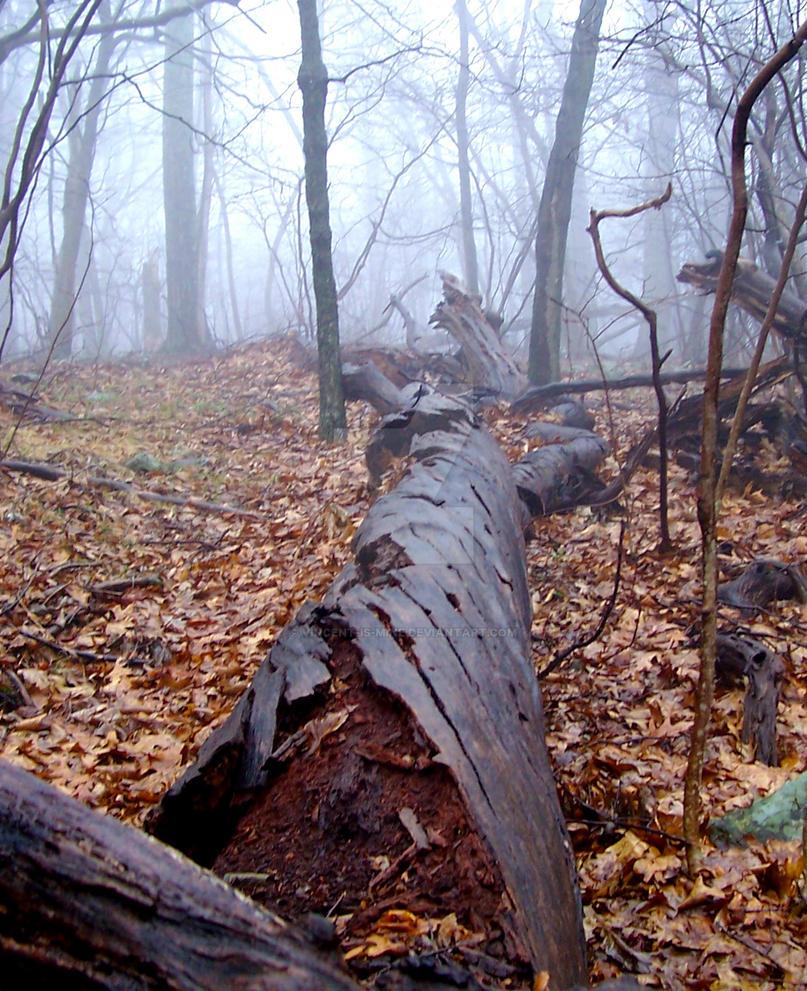 Landscape Photography 3 by vincent-is-mine