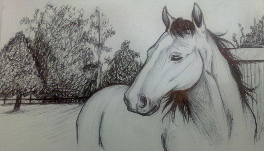 how to draw someone on a horse