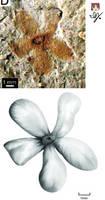 Ingersoll Flower